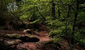 foret fontainebleau